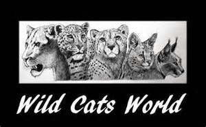 Logo-Wild cats world